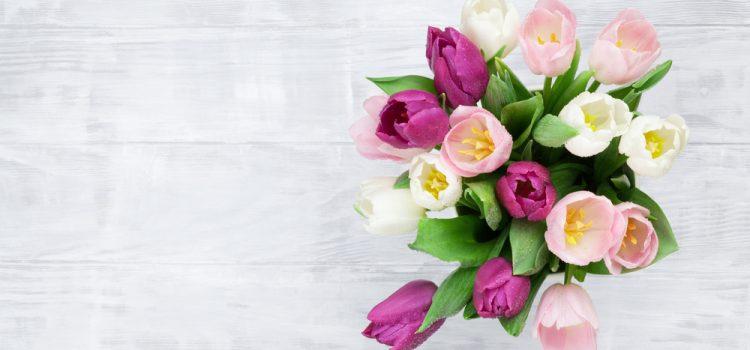 再会と感動が繋がって、種から花が咲いています